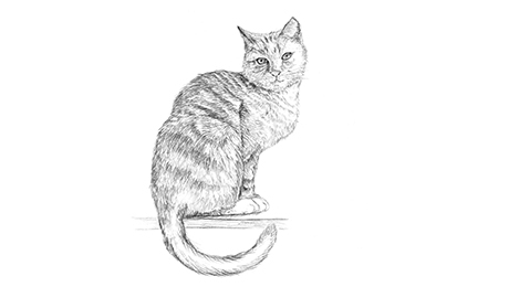 Drawing of a cat sitting down with tail curled under himself