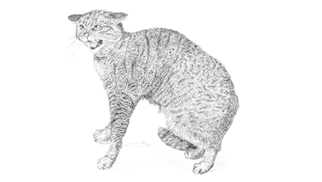 Drawing of a cat looking afraid