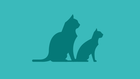 Two cats next to each other mixedbreed icon