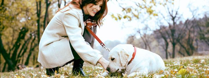 White Labrador outside with owner